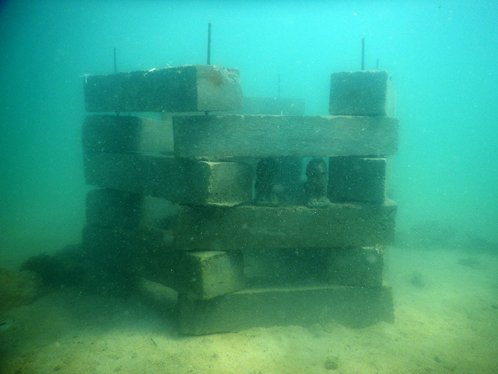 Anti Trawling Device and Artificial Oyster Reef