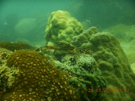 Coral and Crab, volunteer photos