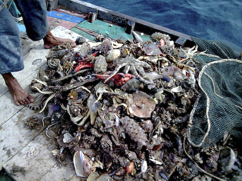 Illegal trawling by catch